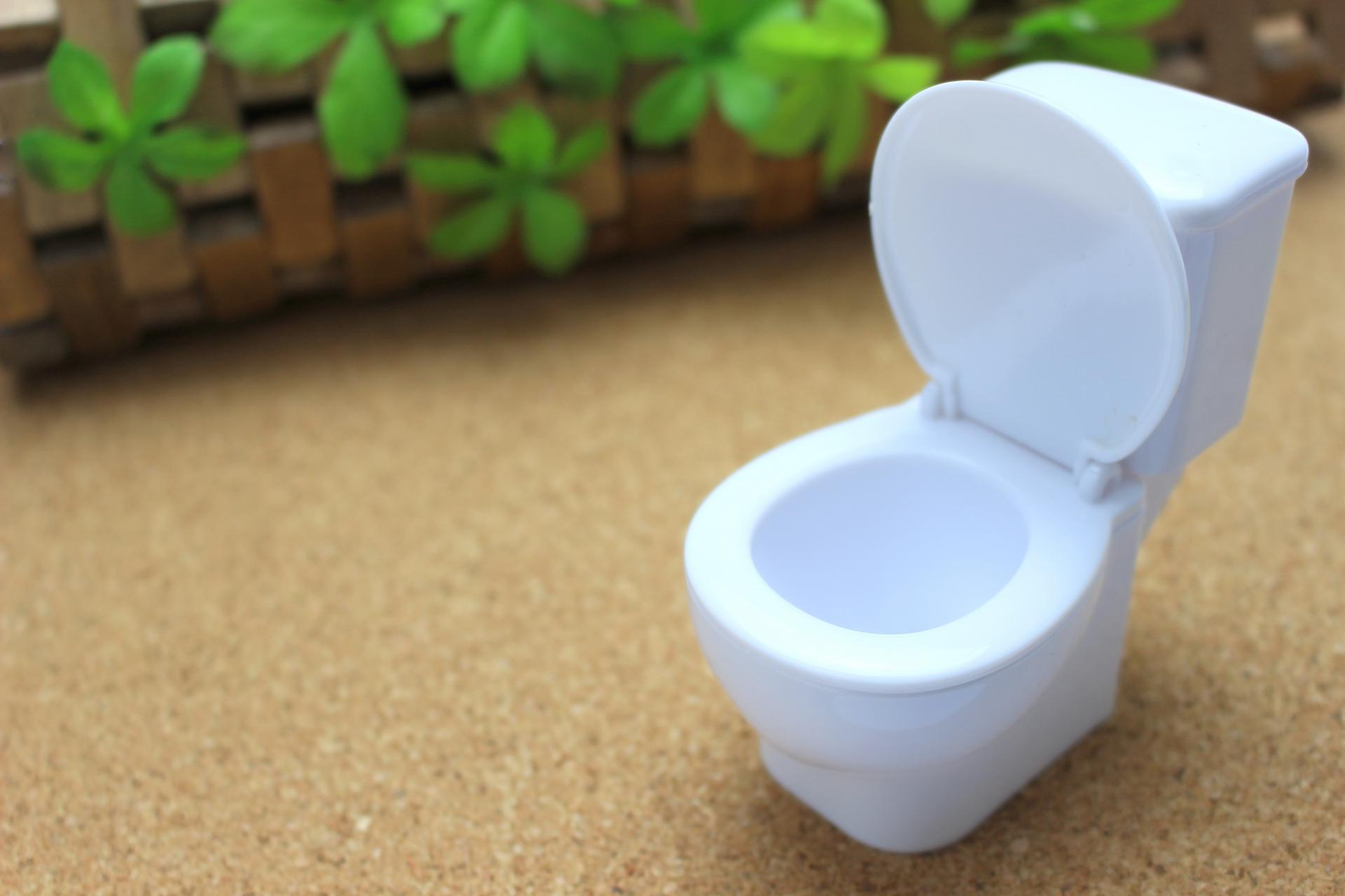 トイレの観葉植物で消臭ができる!画期的なオススメ消臭植物