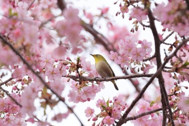 鳥の鳴き声で季節を感じられる?春に聞こえる鳥の声!