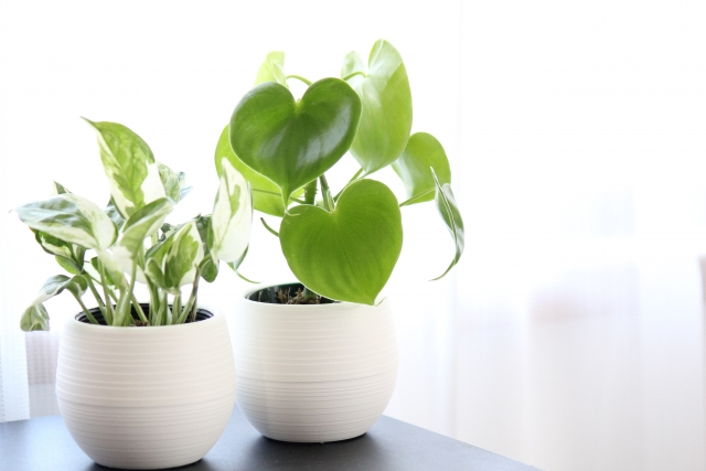 育てやすい観葉植物とは?小さいものを勧める理由と楽しみ方