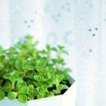 観葉植物に虫がわかないようにしたい方必見!効果抜群対策法