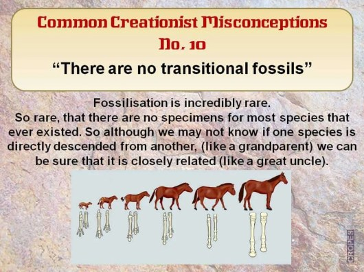 There are no transitional Fossils