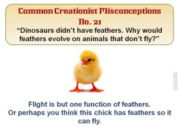 Why would feathers evolve on animals that don't fly?