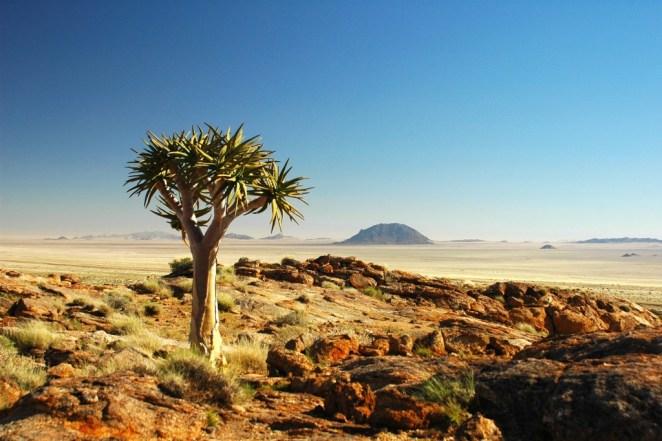 The Karoo Desert