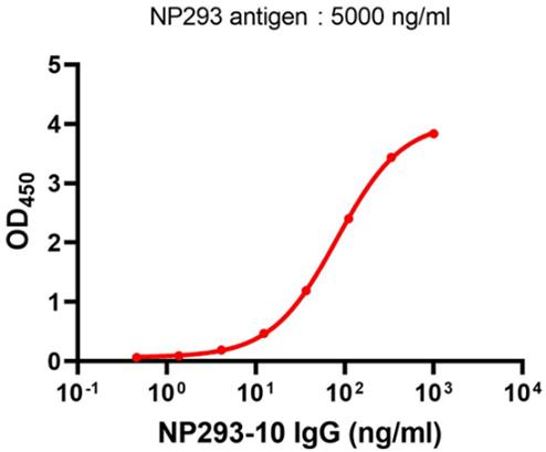 Anti-nucleocapsid protein (SARS-CoV-2) monoclonal antibody (AT-NP-H10)