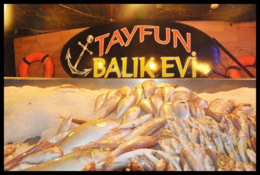 Tayfun Balıkçılık- Tayfun Bulu- Antalya TV- Muhabir Rüya Kürümoğlu (12)