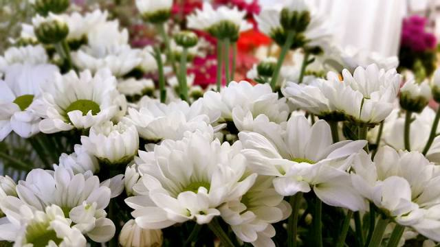 Antalya Işıklarda Çiçekçiler - 0538 9692901 Gülşen Çiçek Evi (24)