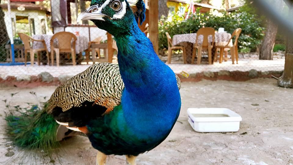 Paşa Kır Bahçesi Çakirlar – 0242 4394747 – Antalya Van Kahvaltısı Çakırlar Kahvaltı Yerleri (5)