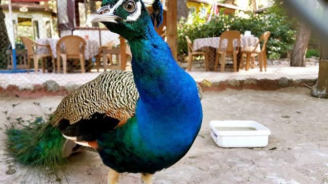 Antalya Köy Kahvaltısı - 0242 4394747 - Çakırlar Gzöleme Bazlama Paşa Kır Bahçesi Çakirlar (5)