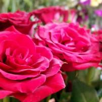 antalya çiçek sipariş 0242 3453210 çiçek gönderme orgil çiçekçilik (6)