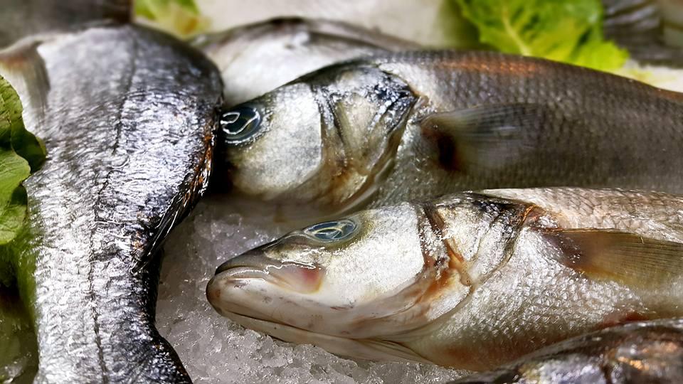 Ekici Restaurant – 0242 2484142 antalya kaleiçi yat limanı mekanlar restaurant bar balık evi (24)