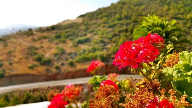 ücretsiz çiçek fotoğrafları free stock photos (2)