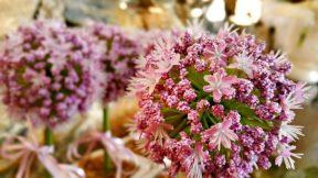 Ücretsiz Çiçek Fotoğrafları - Free Stock Photos