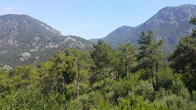 Antalya Altınyaka Yolunda Çam Ormanları ve Deniz Manzarası - Antalya Tatil