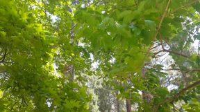 Altınyaka Yolunda Söğütlü Çeşme ve Doğa Manzarası Antalya