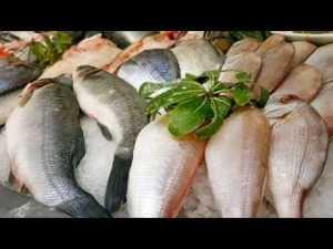 Balık Tezgahı Süsleme - Ekici Balık Restaurant Kaleiçi Yat Limanı Antalya