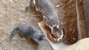 Komik yavru kedi annesinin yanında oyun oynuyor