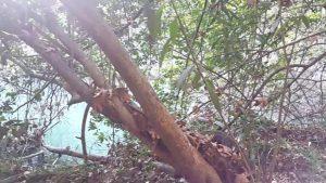 Kurşunlu Şelalesi Bitki Tüneli Antalya Doğal Güzellikler Best Places in Antalya Tatil Videoları