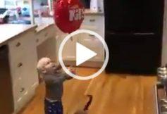 Akıllı kedinin yaptıkları görenleri şok etti - Komik Videolar
