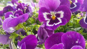 Çiçeklerin Ahengi ve Güzelliği - Tarık Akan Parkı Haşim İşcan Kültür Merkezi