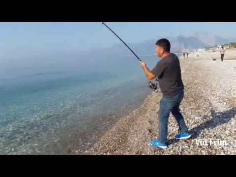 Antalya konyaalti sahili 30 kg kuzu avı ve suya salımı – CUMA KOKSAL