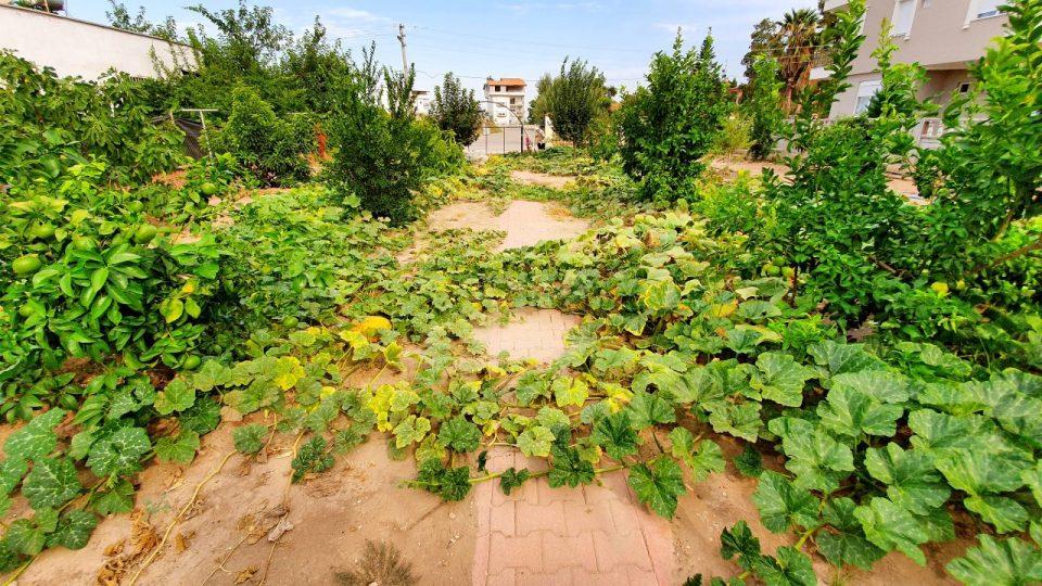 Bal Kabağı – Antalya Döşemealtı Hobi Bahçesi Muzaffer Aksoy_4