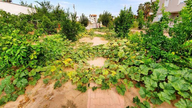 Bal Kabağı - Antalya Döşemealtı Hobi Bahçesi Muzaffer Aksoy_4
