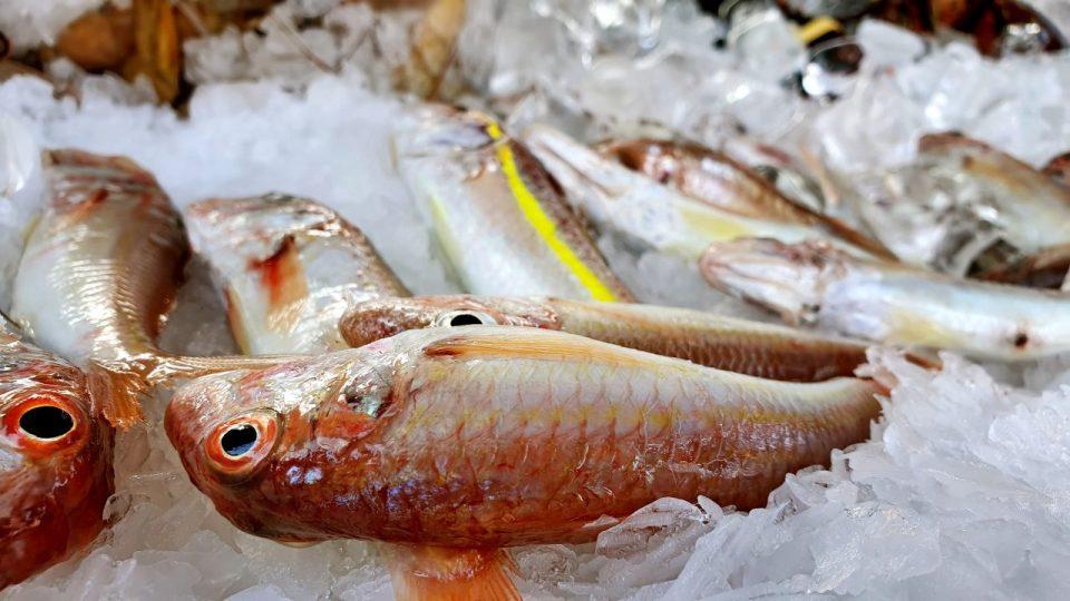 Yat Limanı Balık Restoranları – Ekici Restaurant Antalya balık dolabı dizaynı_2