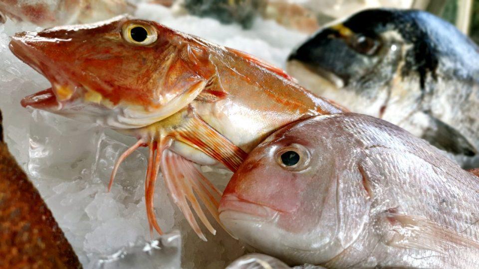 Yat Limanı Balık Restoranları – Ekici Restaurant Antalya balık dolabı dizaynı_3