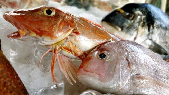 Yat Limanı Balık Restoranları - Ekici Restaurant Antalya balık dolabı dizaynı_3