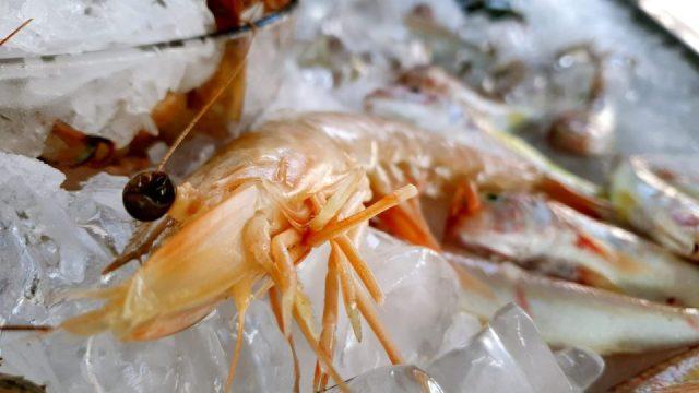Yat Limanı Balık Restoranları - Ekici Restaurant Antalya balık dolabı dizaynı_6