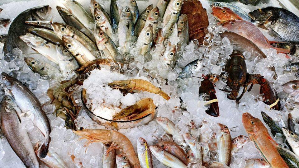 Yat Limanı Balık Restoranları – Ekici Restaurant Antalya balık dolabı dizaynı_9