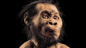Homo naledi ve İnsanın Evrimsel Yolculuğunda Güncel Bulgular