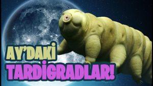 Su Ayıları: Ay'a Saçılan Tardigradların Dünyasına Bir Bakış!