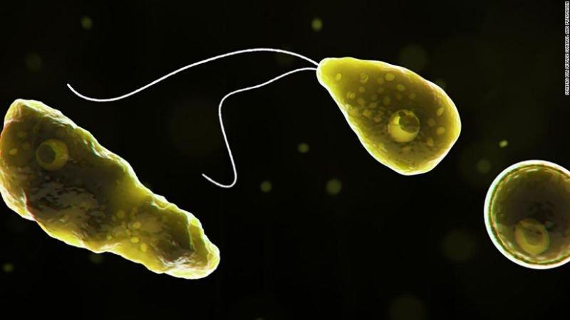 beyin yiyen amip naegleria fowleri nedir belirtileri nelerdir 4