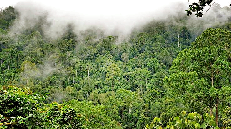 Yağmur ormanlarında gezmenizi sağlayacak 8 video