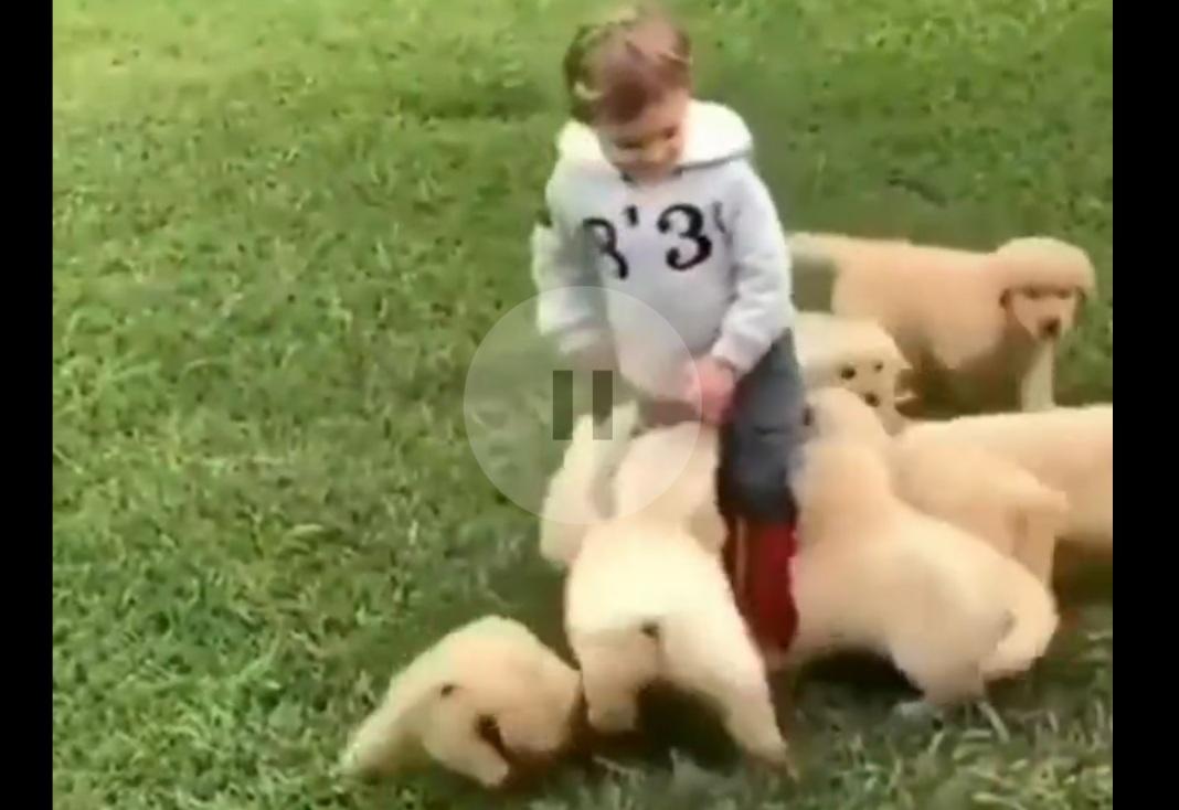 yavru köpekler sevgi çemberi