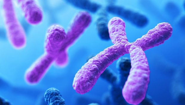 chromosome – DNA – Is there a bee's chromosome number in the Qur'an – miracles of the Qur'an