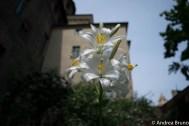Torino, fiori a Palazzo Madama