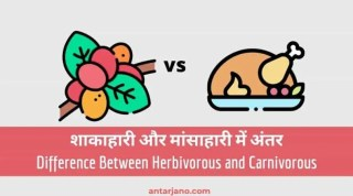 5 Difference Between Herbivorous and Carnivorous in Hindi