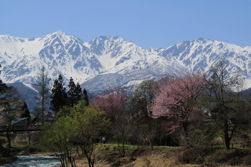 桜シーズンの大出公園と北アルプス