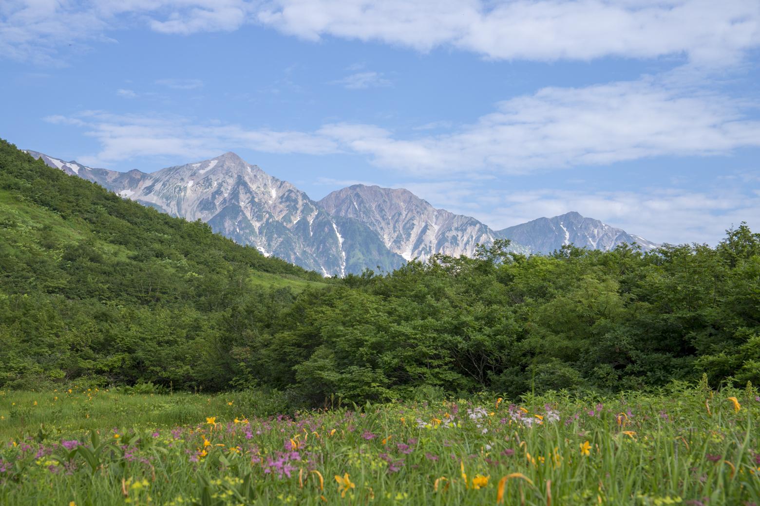 白馬三山とお花畑