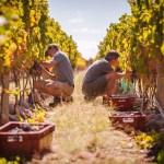 In vino veritas: лучшие собрания вин в отелях Leading Hotels