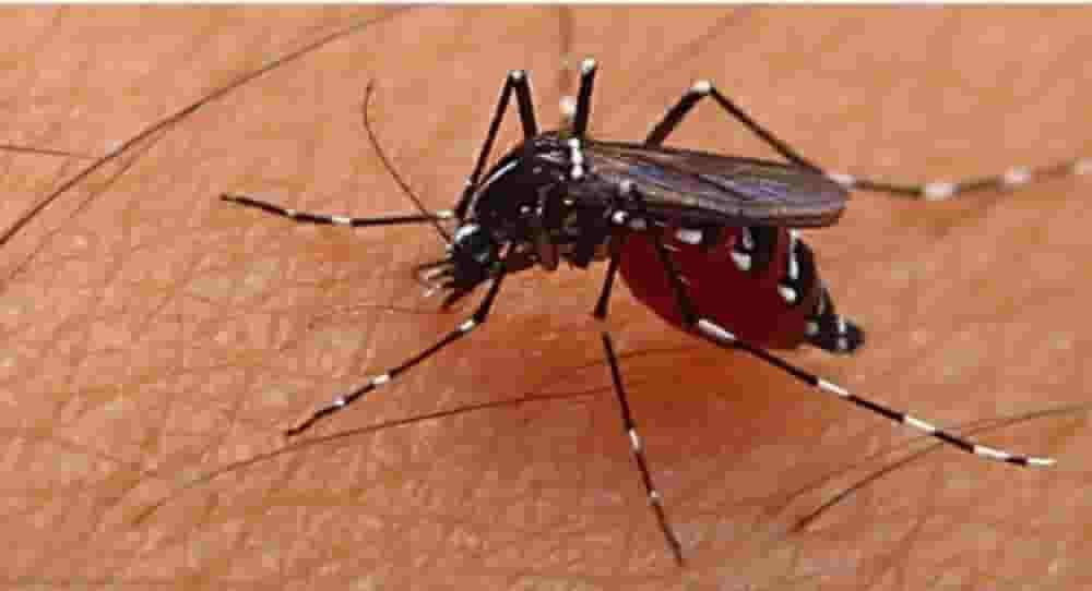 Cara Mengusir Nyamuk dengan Bahan di sekitarmu