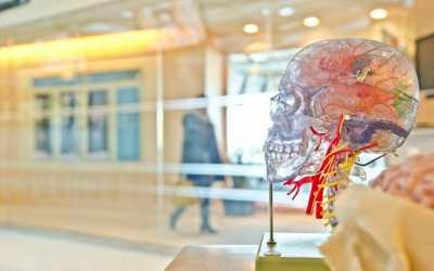 Brain – Gut Connection and Cognitive Decline