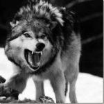 Ο Λύκος της Στέπας του Έρμαν Έσσε στη σύγχρονη κοινωνία