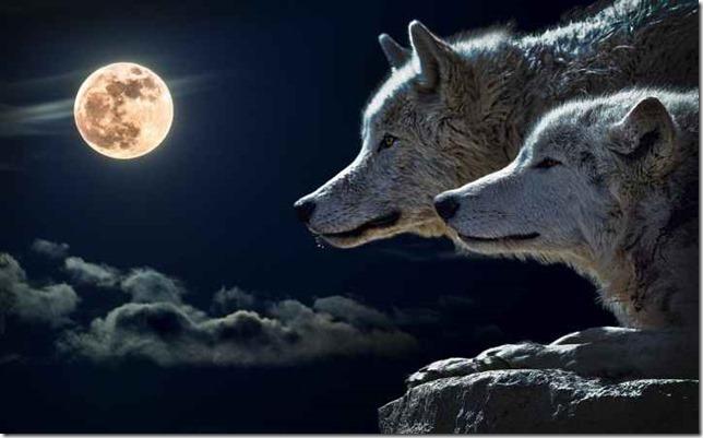 wolf-torque-wolf-moon-cloud