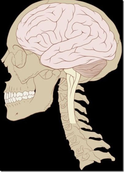 Skull_and_brain_normal_human