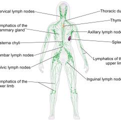 Diagram Lymph Nodes On Back Of Head 2002 Nissan Sentra Parts Neck And Shoulders Anthology Wellness