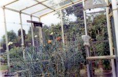 Greenhouse that I glazed.