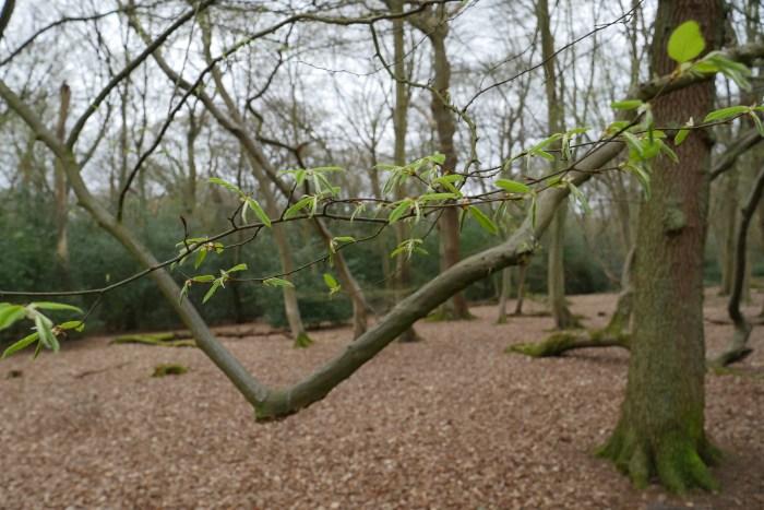 Hadley Wood green Shoots